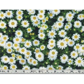 Canvas de coton imprimé BB 5201-2